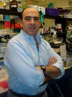 Fernando Goni, PhD MS Adjunct associate professor Department of Neurology, Center for Cognitive Neurology NYU School of Medicine NYU Langone Medical Center