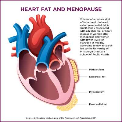 Heart Fat and Menopause credit: Rick Sciullo/UPMC