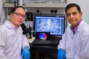 Associate Professor Lim Lee Wei (Sunway University, Malaysia) and Assistant Professor Ajai Vyas (Nanyang Technological University, Singapore) discover a new treatment using deep brain stimulation of the Prefrontal Cortex for dementia.