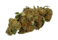 A dried Cannabis bud, typical of what is sold for drug use- Wikipedia image