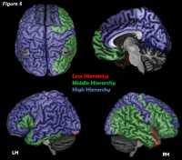 Researchers suggest that there are unique areas in the brain's neuronal network that can serve as the conscious complex of the brain, enabling conscious activity
