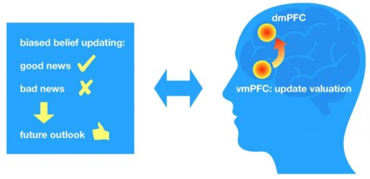 People demonstrate biased belief updating: They tend to regard good news indicating that personal risks are lower than expected, and to disregard bad news indicating that personal risks are higher than expected. Kuzmanovic and colleagues show that this optimism bias depends on the update valuation by the ventromedial prefrontal cortex (vmPFC) and its influence on the dorsomedial prefrontal cortex (dmPFC) associated with self-referential reasoning. Credit: Bojana Kuzmanovic