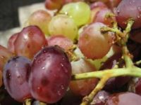 MedicalResearch.com Interview with: Jamie Cooper Consultant in Emergency Medicine Aberdeen Royal Infirmary Aberdeen MedicalResearch.com: What is the background for this study? Response: Choking in children can be fatal and regularly grapes can be the cause. We believe that public awareness of the choking hazard posed by grapes (and other similarly shaped foods, such as cherry tomatoes) is not wide spread. By publishing this article we aimed to highlight the problem to health professionals who look after children and also to the public at large in an attempt to reduce the number of future episodes. MedicalResearch.com: What are the main findings? Response: With parental consent we published the cases of three small children who suffered choking episodes as a result of whole grapes, two of whom died as a result. In each case it was not possible to dislodge the grape using first aid techniques. MedicalResearch.com: What should readers take away from your report? Response: Small children are at risk from choking because they have smaller airways, reduced ability to chew foods, underdeveloped swallowing coordination and can be easily distracted when eating. Grapes are a healthy and popular snack but are ideally suited to cause airway obstruction, particularly if inhaled whole. Small children (up to 5 years) should always be supervised by adults while eating; and grapes should be halved, or ideally quartered, before consumption. We hope that by drawing attention to this issue that consideration will be given at a political level to wider dissemination of this information so as to prevent further occurrences. MedicalResearch.com: Thank you for your contribution to the MedicalResearch.com community. Citation: BMJ The choking hazard of grapes: a plea for awareness Note: Content is Not intended as medical advice. Please consult your health care provider regarding your specific medical condition and questions. More Medical Research Interviews on MedicalResearch.com