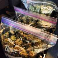 """Big bags of medical #marijuana on Cannabis Culture News LIVE - watch now on www.pot.tv"" by Cannabis Culture is licensed under CC BY 2.0"