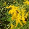 Babies Born During Peak Pollen Season Have IgE in Cord Blood