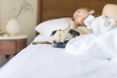 sleep-alzheimers-dementia-insomnia