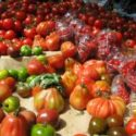 Not All Tomatoes Are Equally Allergenic